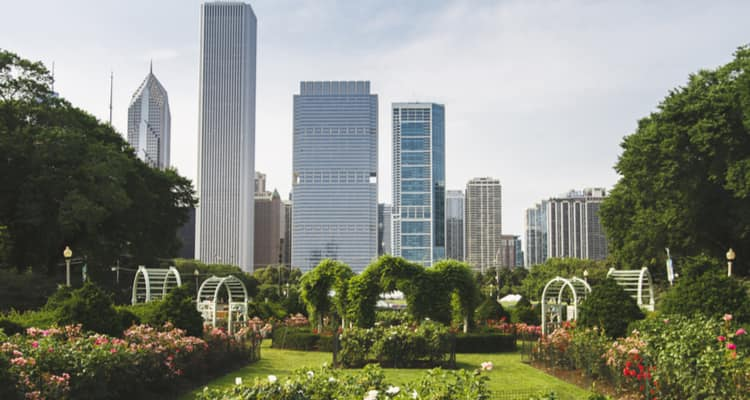summer skyline of chicago from rose garden