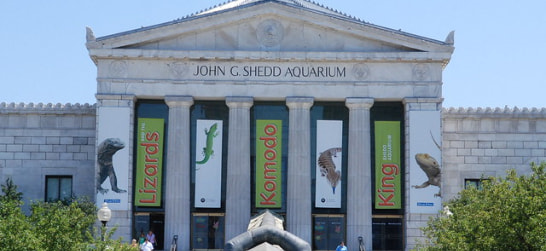 the entrance to shedd aquarium chicago